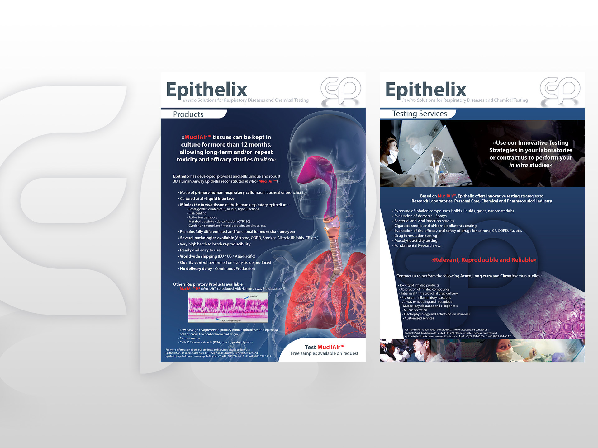 Brochure epithelix