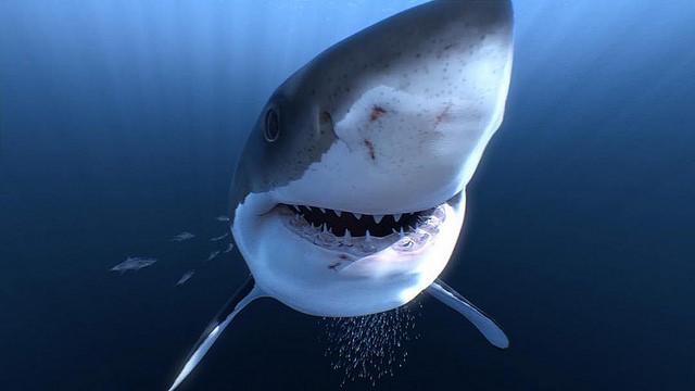 requin en réalité virtuelle