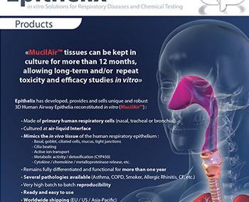 Modélisations 3D pour une brochure médicale – Epithelix